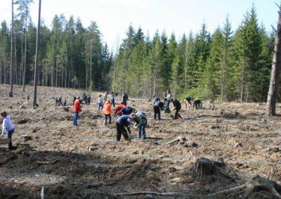Sodiname medžius
