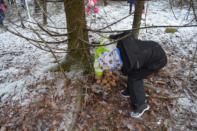 Žiemos pasaka miške!