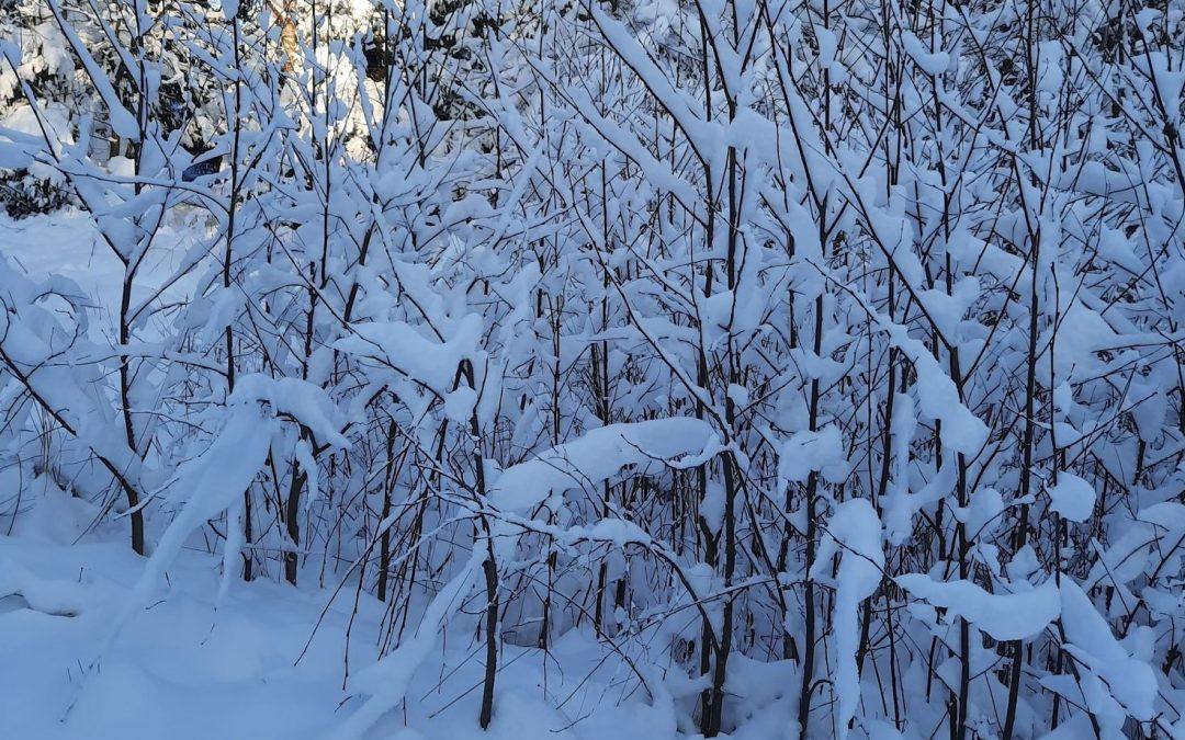 """Marijono Daujoto progimnazijos mokinių projektas """"Balti žiemos keliai"""""""