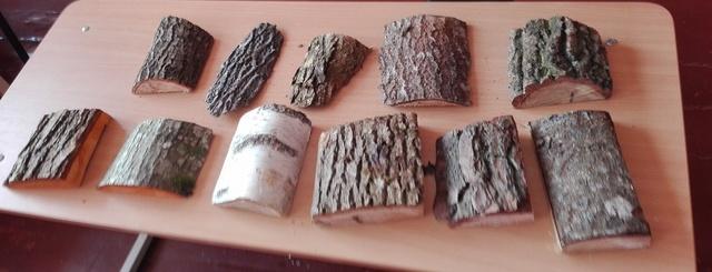 Pamoka apie medžius Kuršėnų Daugėlių pagrindinėje mokykloje