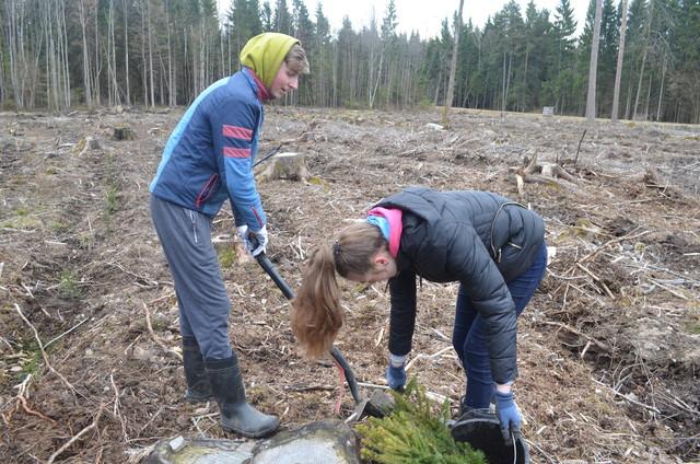 Duoklė gamtai – 15 900 medžių sodinukų!